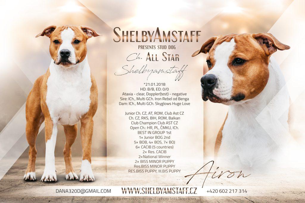 All Star Shelbyamstaff